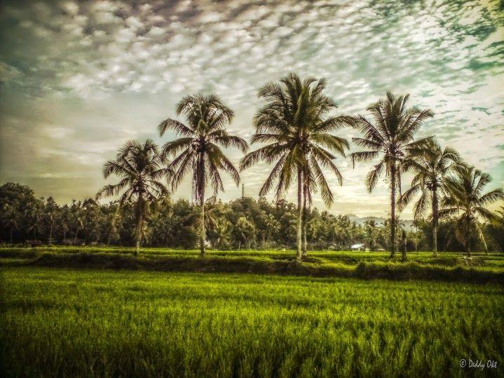 Natural Beauty Of Kerala Kerala Tour Packages Kerala Nature Honeymoon Packages