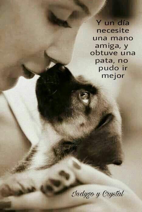 A Message From People Saving Animals Http Peoplesavinganimals