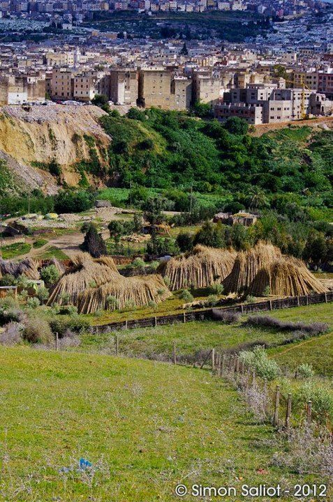 Meknes, morocco, old town, nature