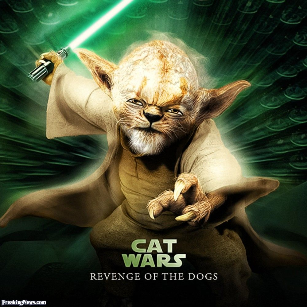 Pin by Crazy Cat Ladies Unite on Cats & Star Wars Star