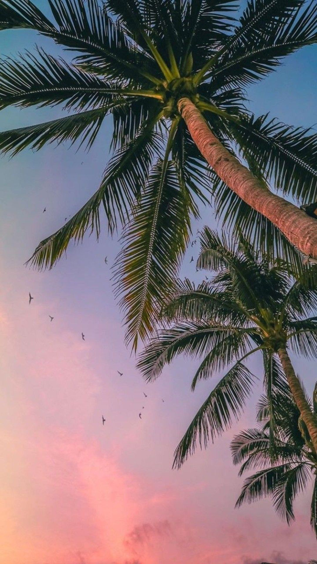 Tree Sky Palm Tree Elaeis Arecales Coconut Palm Trees Wallpaper Pretty Wallpapers Tree Wallpaper