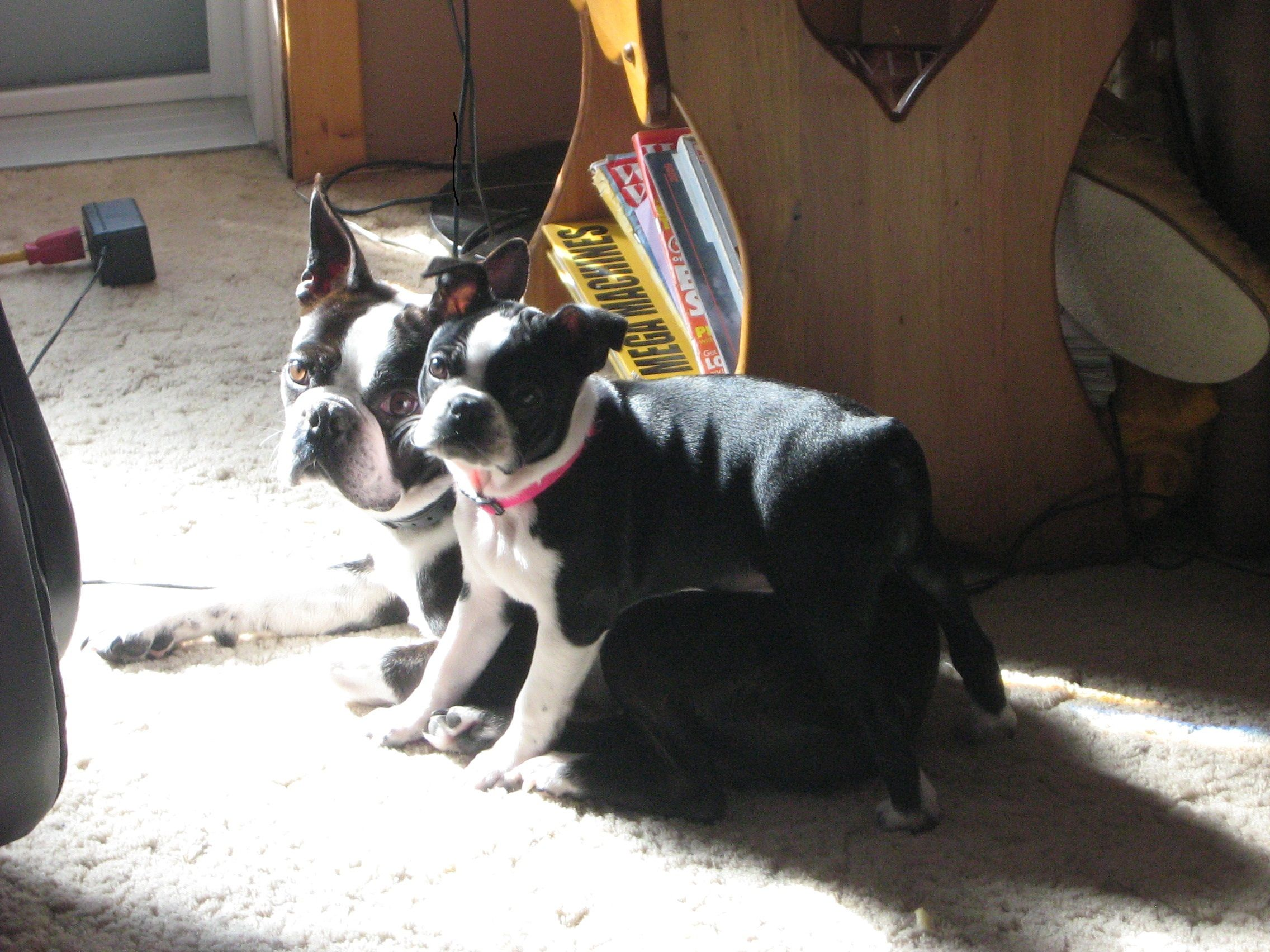 Harvey and his baby girl from first litter (2012)