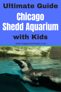 Chicago Shedd Aquarium - Tips on what to see and do with kids. This fun Illinois aquarium houses dolphins, fish, penguins, jellyfish and more aquatic animals your family will love. #sheddaquarium, #chicagoattractions, #chicagomuseums, #traveltips