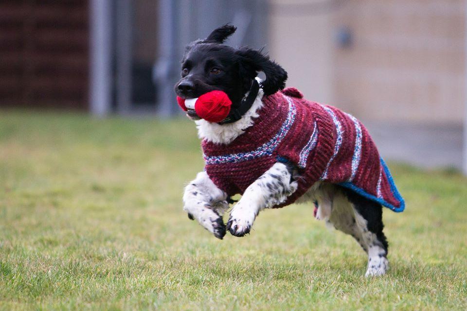 Un grupo de mujeres crea estos hermosos suéteres para perros en ...