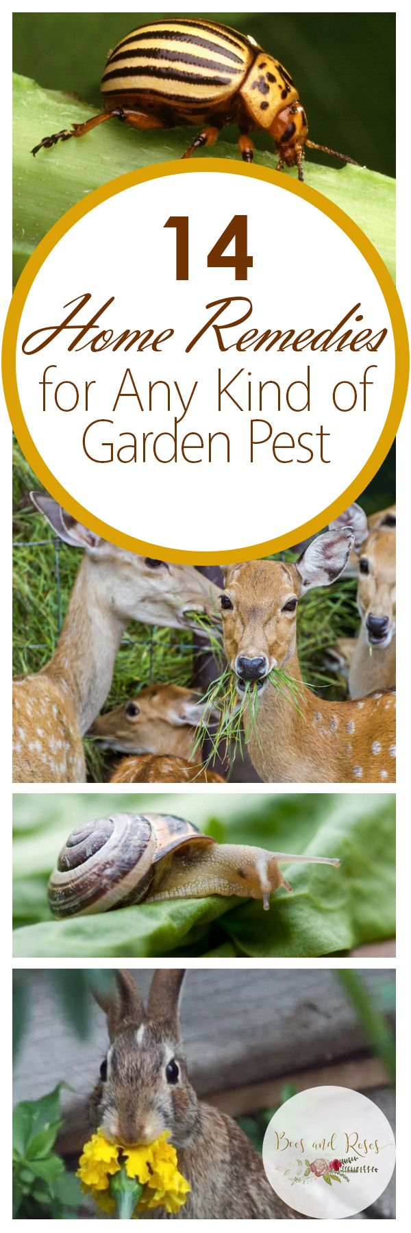 14 home remedies for any kind of garden pest