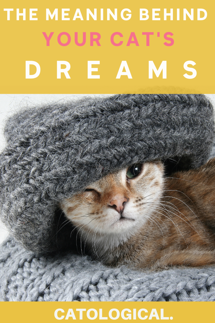 Do Cats Dream Can They Have Nightmares In 2020 Cat Behavior Cat Facts All Cat Breeds