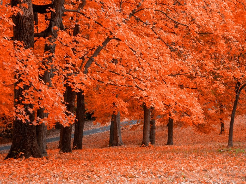 Free Screensavers Download Saversplanet Com Fall Pictures Autumn Trees Fall Wallpaper
