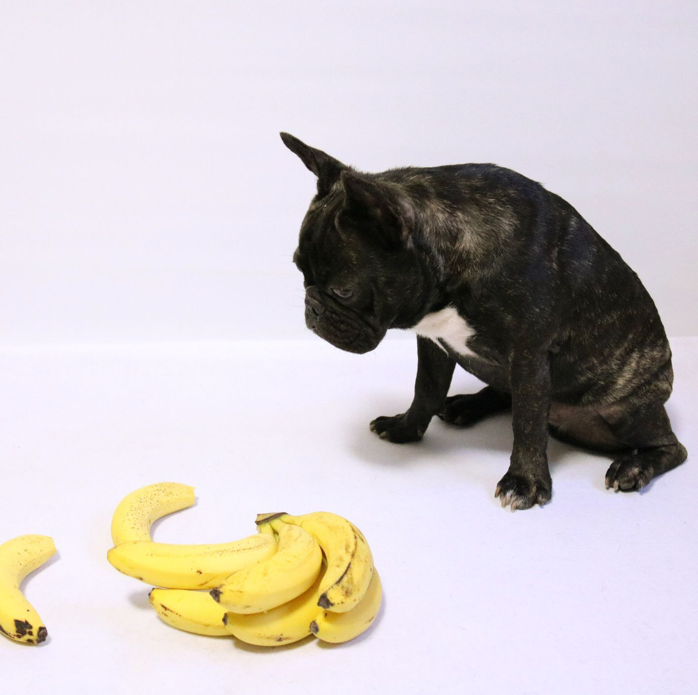 Bananas For Dogs It May Not Be The Worst Thing Bananas For Dogs