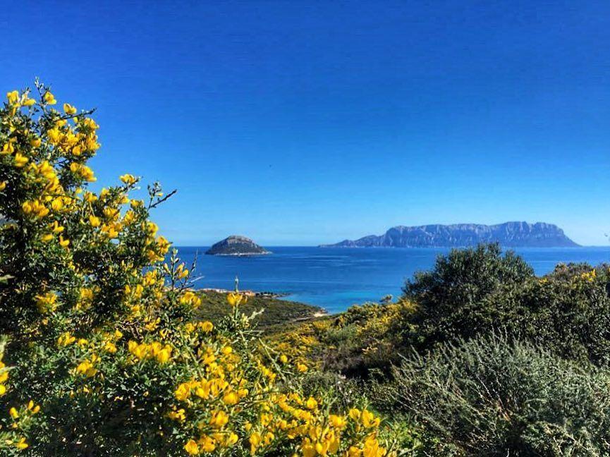 La Sardegna in questo periodo si copre di giallo. Lasciarsi avvolgere dalla bellezza: ci sono giornate nelle quali ogni cosa sembra più facile. (Bentornata ginestra!). #Sardegna #nature #landscape #seaview #ginestra #mediterranean #sea #naturelovers #mycountry #tavolara #figarolo #islands #gallura #sardinia #italy #flowers #broom #yellow #winter #offseason #perfectday #sunday