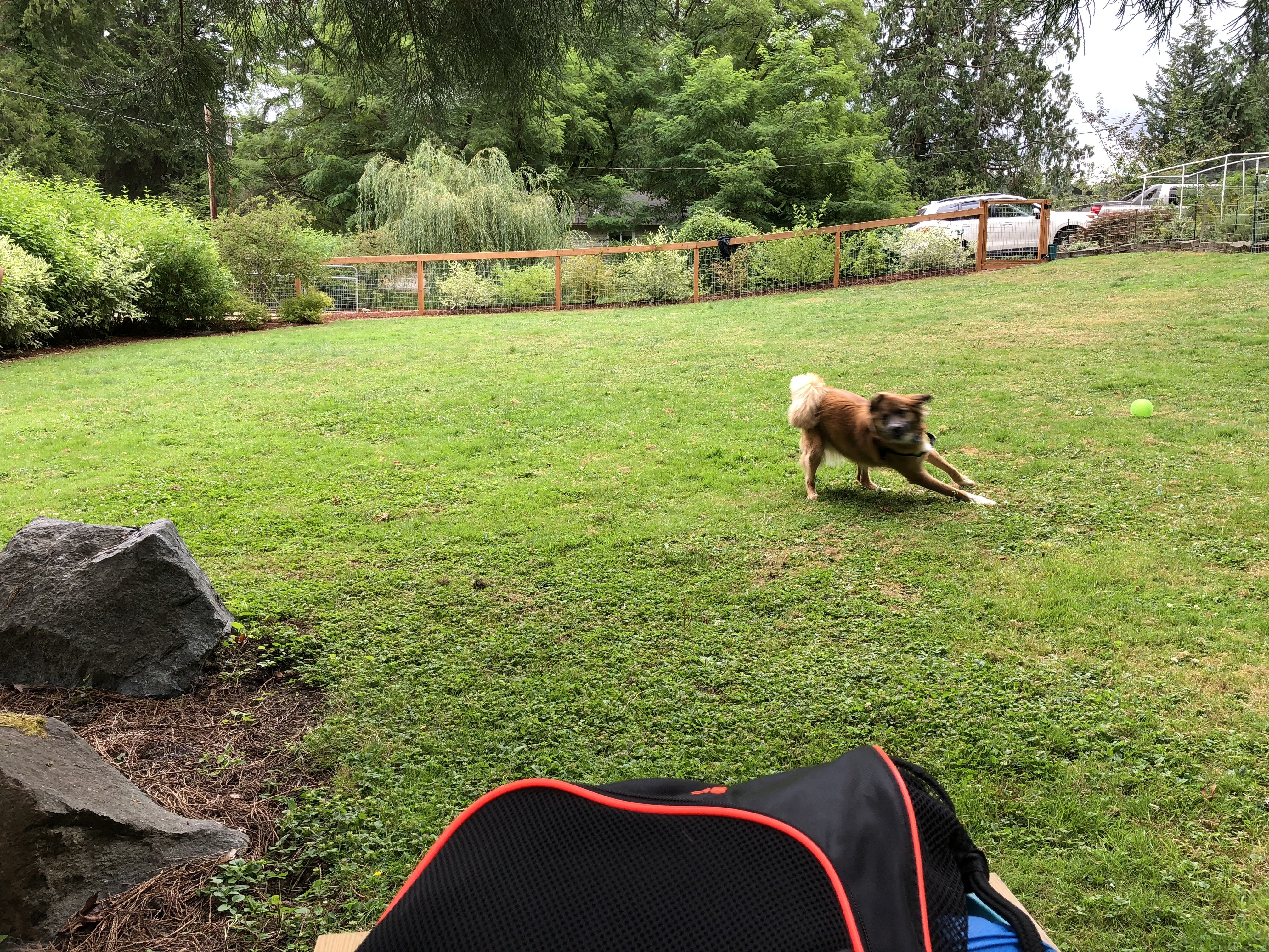 This Photo Is From A Sniff Spot A Privately Bookable Off Leash Area Sniffspot Is An Alternative To Dog Parks Sniffspot Enables Anyone Dogs Pup Dog Park