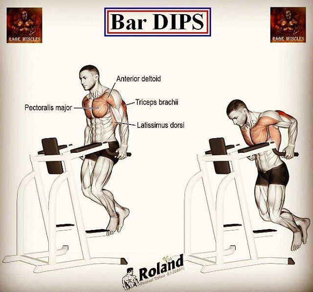 Websta Rage Muscles The Chest Dips Are A Classic Bodyweight Compound Exercise That Provide Ma Bench Press Weights Muscular Development Compound Exercises