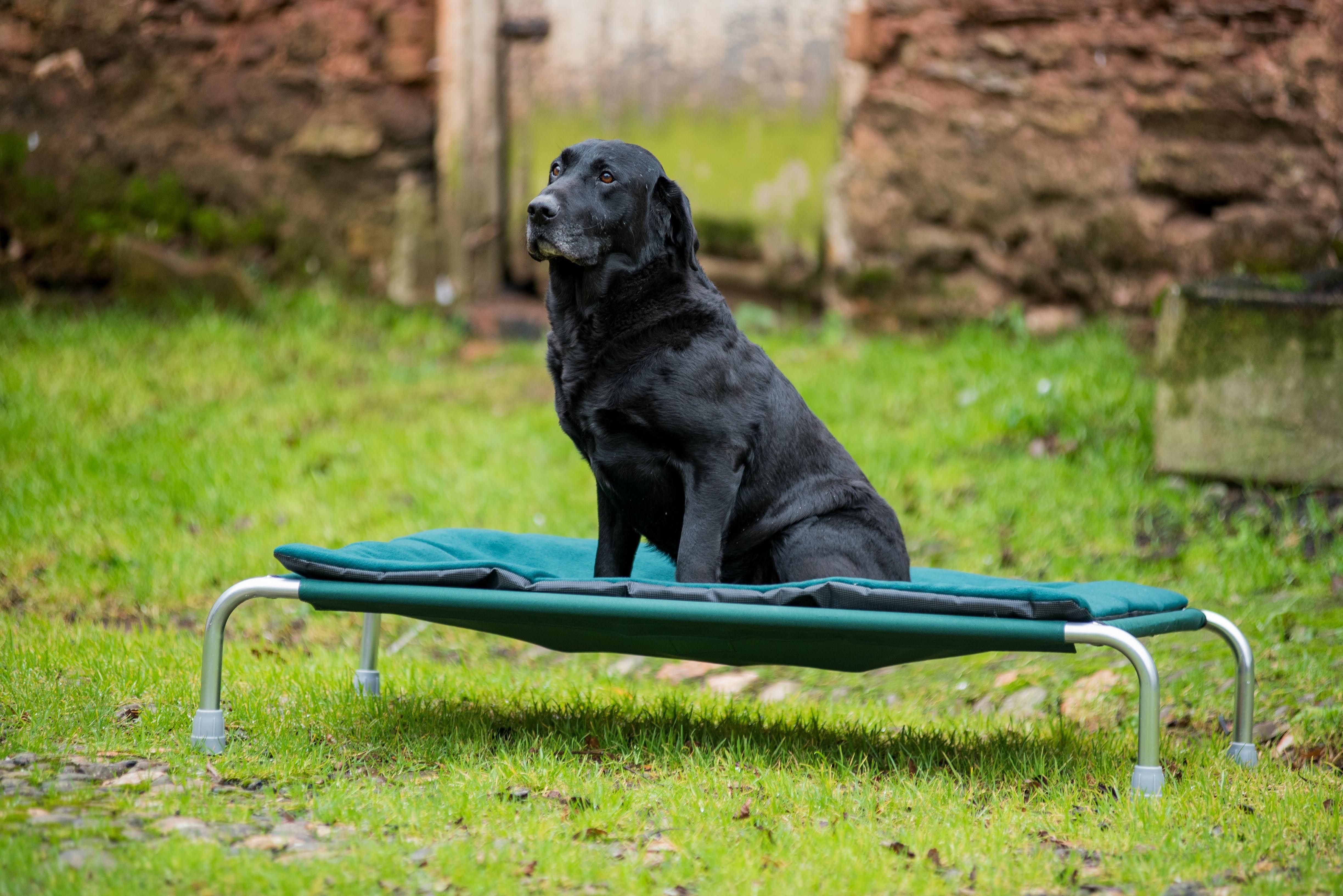 Raised Dog Beds by Berkeley Raised dog beds, Dog beds uk