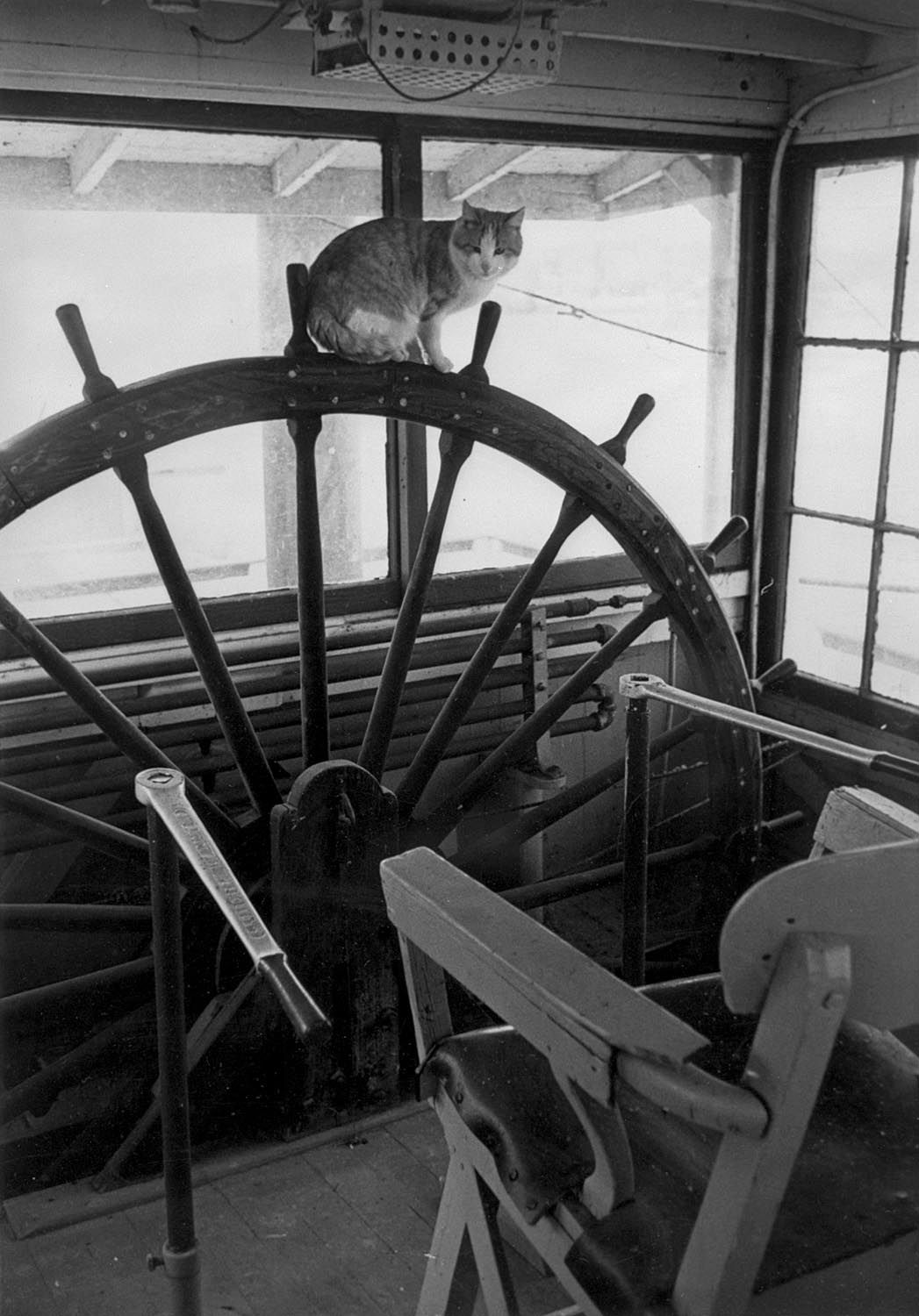Animals on Board Description:  	PHOTO DESCRIPTION: A large cat sitting on the actual pilot wheel in the interior of the pilot house of an un...