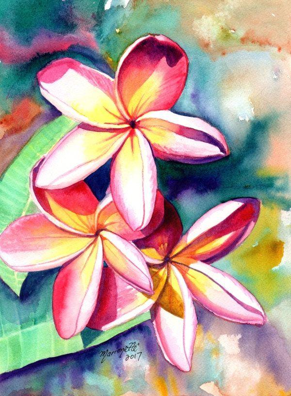 Plumeria Watercolors Hawaiian Flowers Tropical Flowers Frangipani Art Kauai Fine Art Original Plumeria Paintings Flower Art Tropical Art Flower Painting
