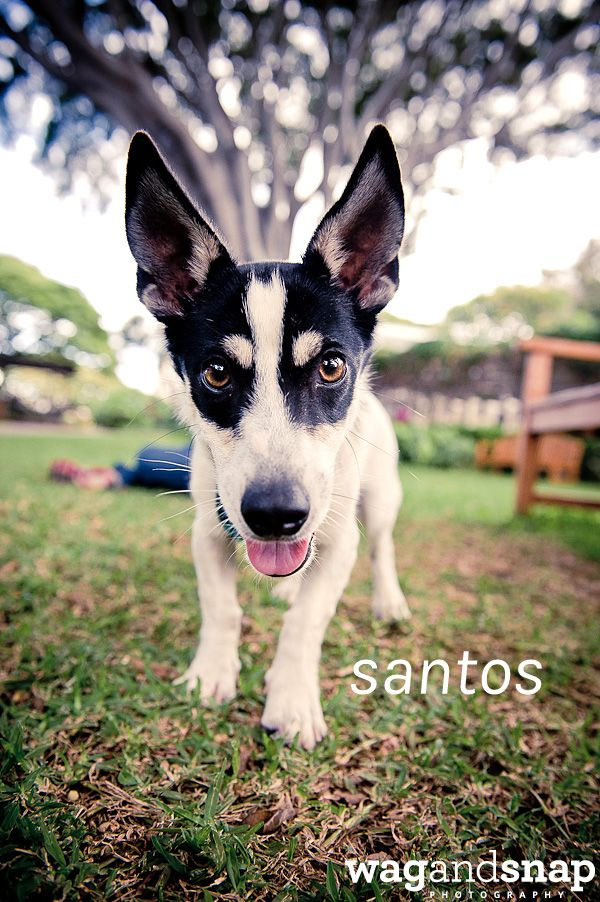 wag and snap for hawaiian humane society Rescue dogs