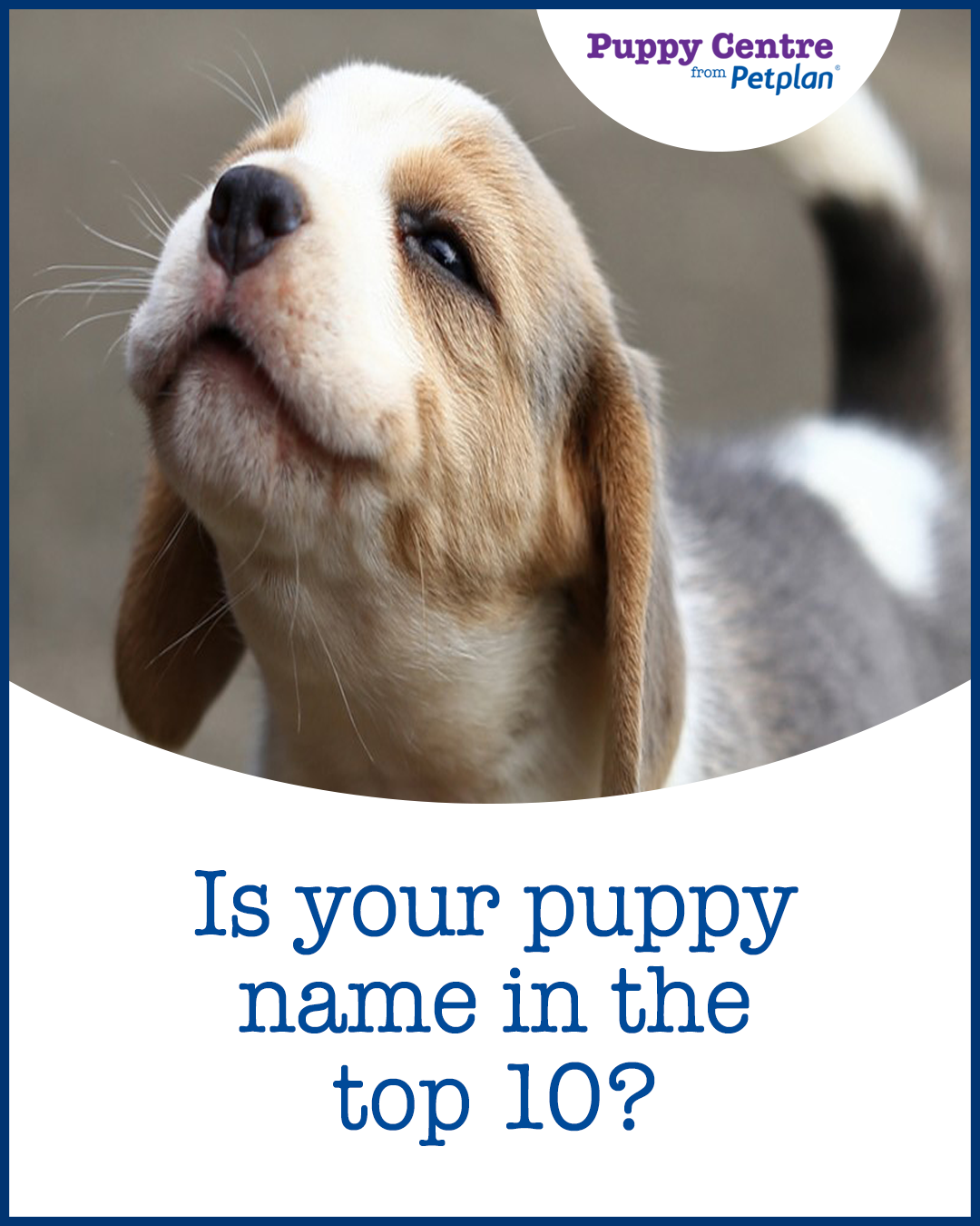 Pin by Puppy Centre on Expert puppy advice Puppy names