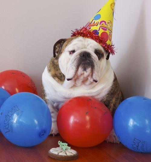 Happy Birthday To Me Cute Bulldogs Dog Birthday Animal Party