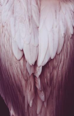 """ilariafilippi: """"Elegance Regis Royal Zoo, Amsterdam el año 2015 Feb c.  Ilaria Filippi """""""