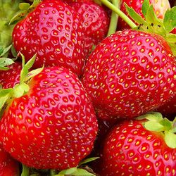 Strawberry Care Cultivars Strawberry Types Of Strawberries Fruit