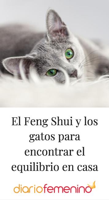 Como Encontrar El Amor Segun El Feng Shui El Feng Shui Y Los Gatos Para Encontrar El Equilibrio En Casa