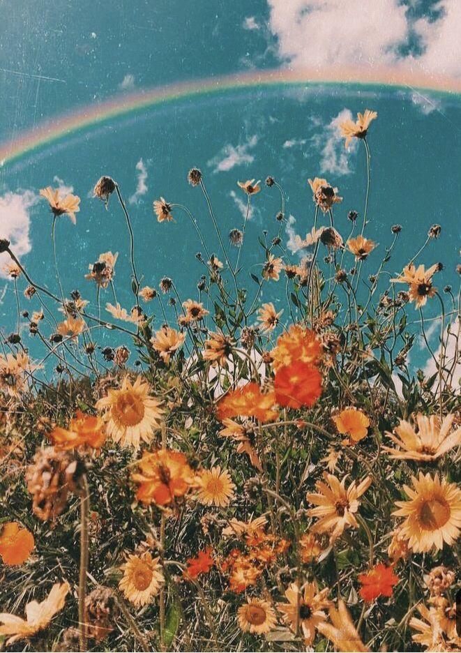 Sunflower�