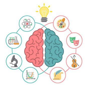 Los hemisferios cerebrales pdf free