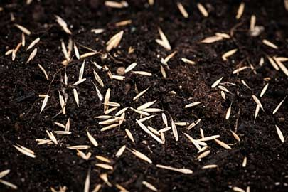 5 Easy Steps for Planting Grass Seed This Fall is part of Grass lawn Plants - Follow these 5 steps for success when planting a new lawn or overseeding your lawn this fall