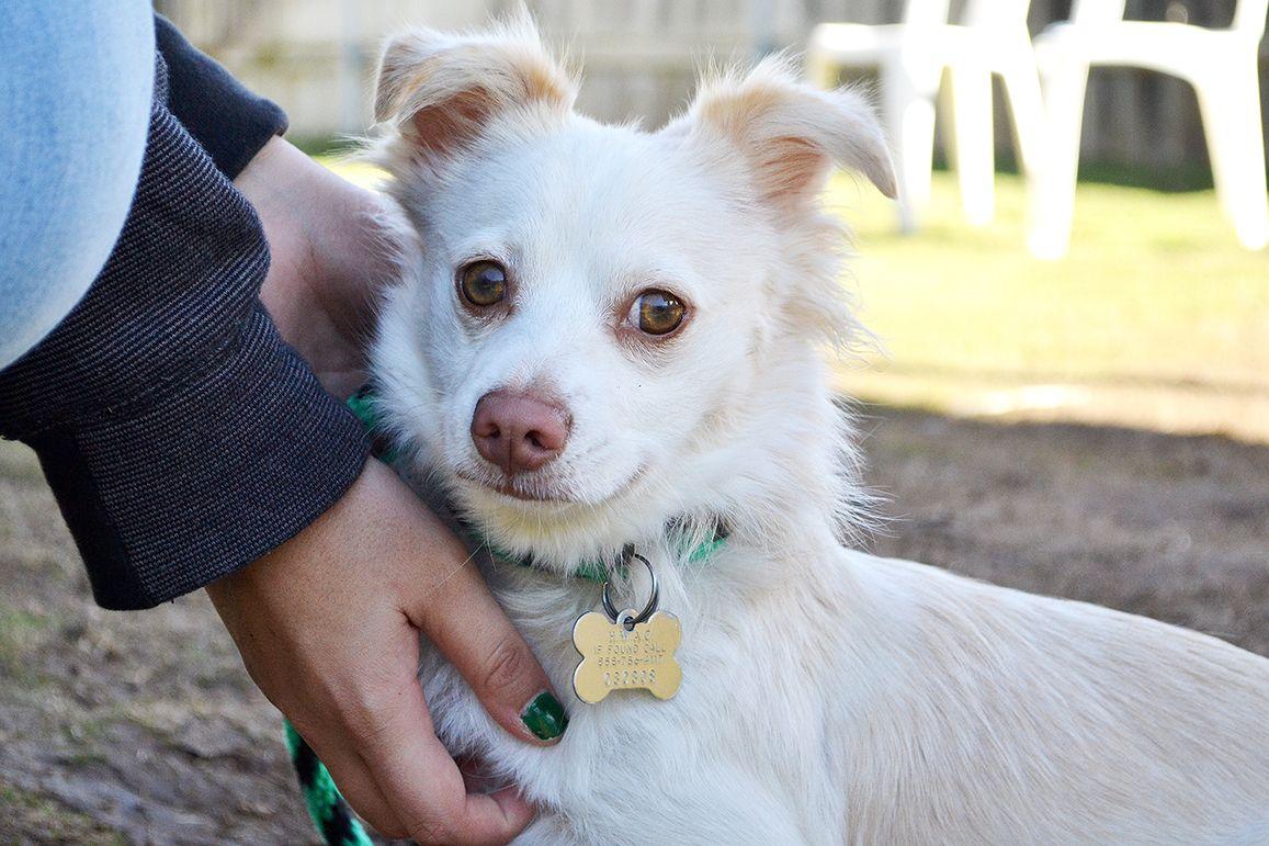 Adopt a Pet Pets, Save a dog, Animals