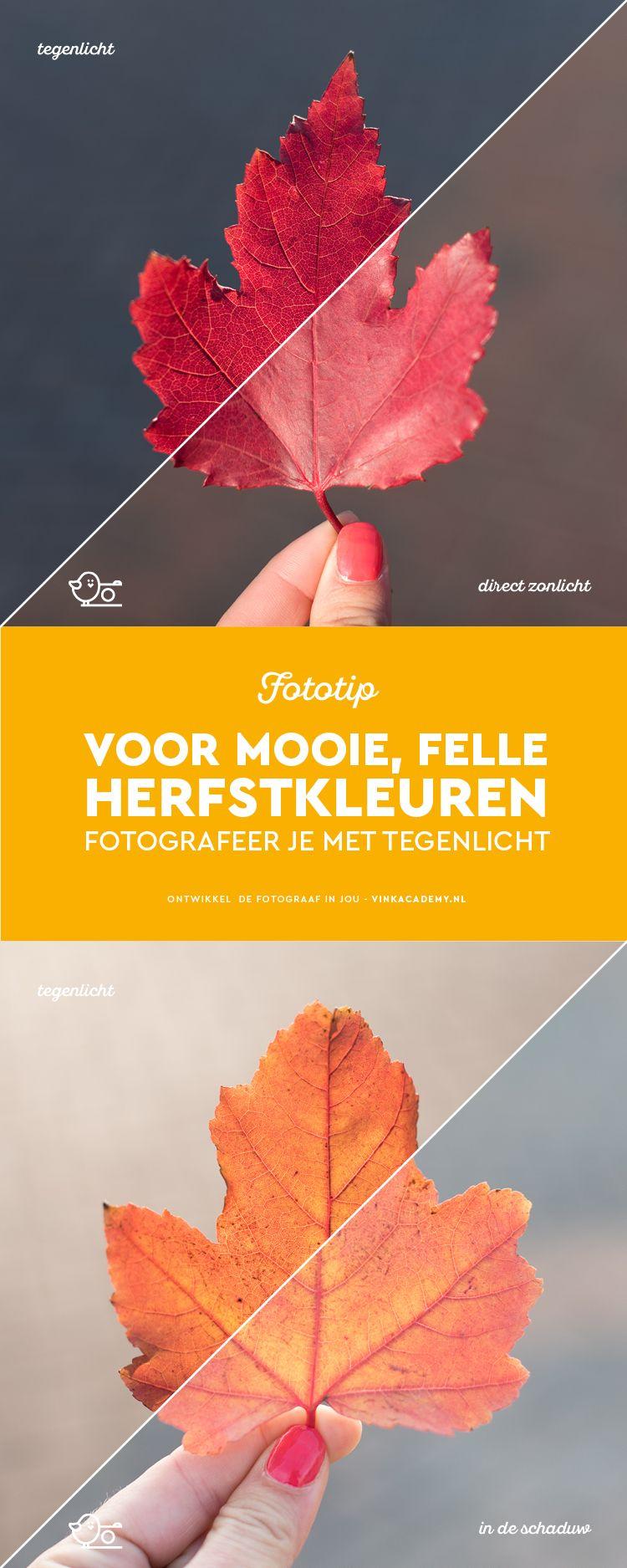 Hoe fotografeer je de herfstkleuren het best? Nou... bijvoorbeeld door te fotograferen met tegenlicht. Bekijk het artikel voor duidelijk voorbeelden en nog meer fototips.  Fotografietips, fotografie-inspiratie, Herfstfotografie, Natuurfotografie, Landschapsfotografie