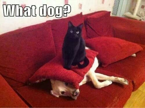 What dog?