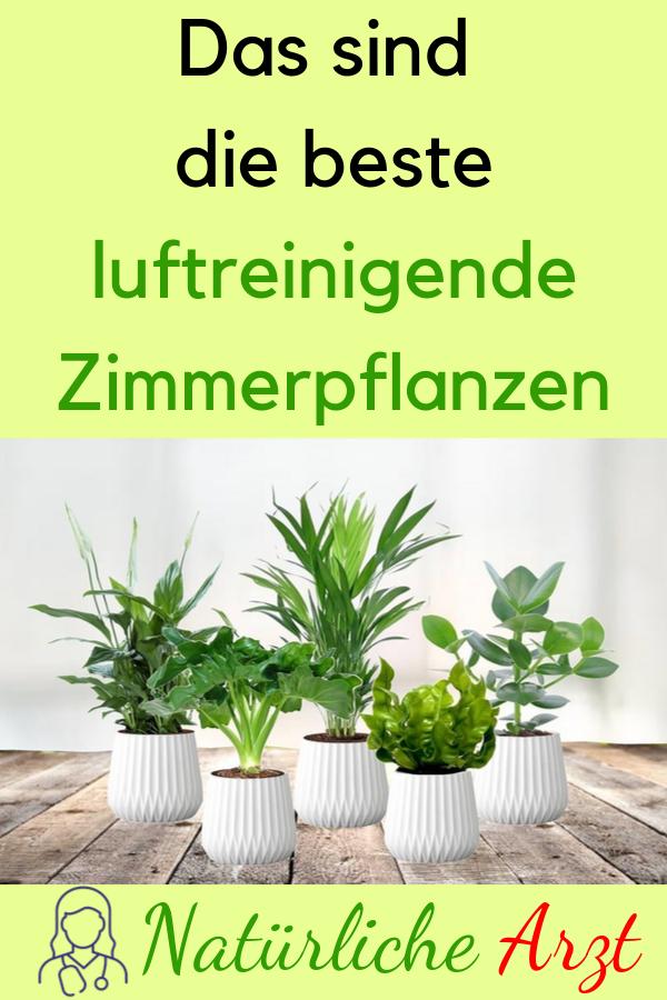 Das Sind Die Beste Luftreinigende Zimmerpflanzen Zimmerpflanzen Pflanzen Luftreinigende Gesundheit Indoor Air Purifying Plants Plants Indoor Plants