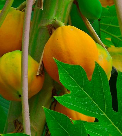 Ayurveda's 8 Best Foods for Preventing Heart Disease