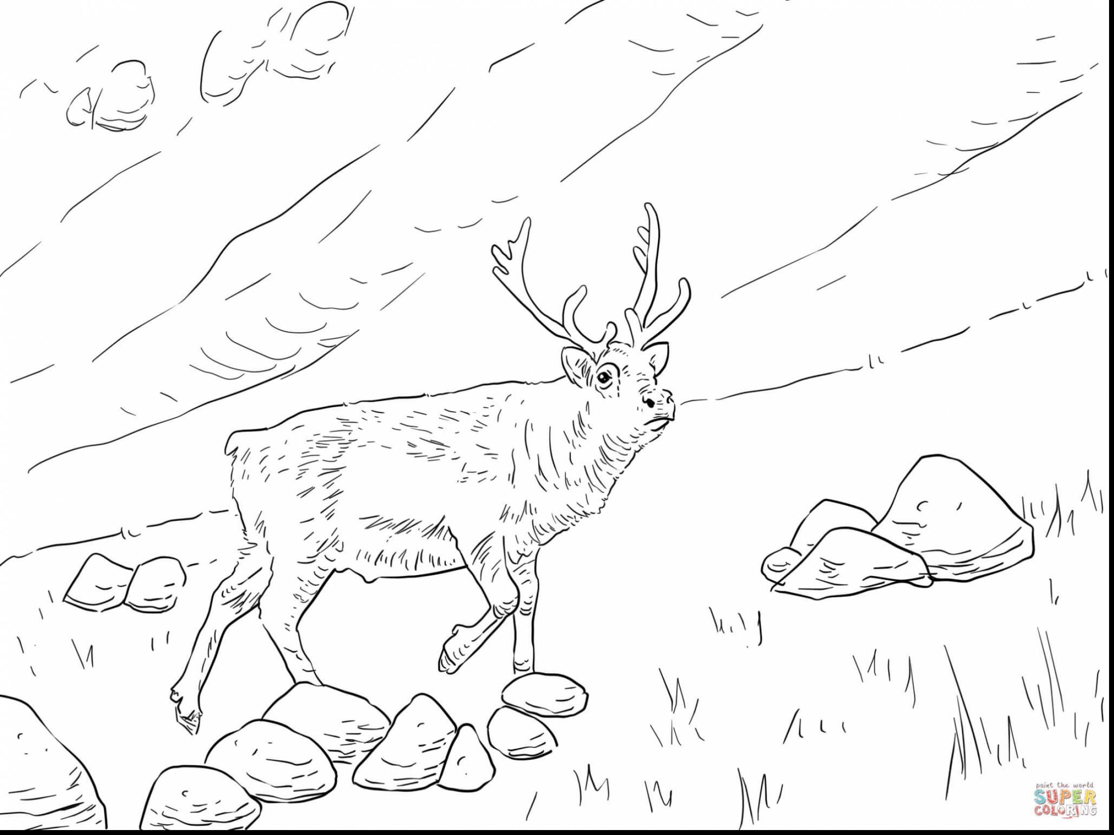 Awesome Reindeer Printable Coloring Pages With Reindeer Coloring Page And Reindeer Antlers Coloring Pag Animal Coloring Pages Reindeer Printable Coloring Pages