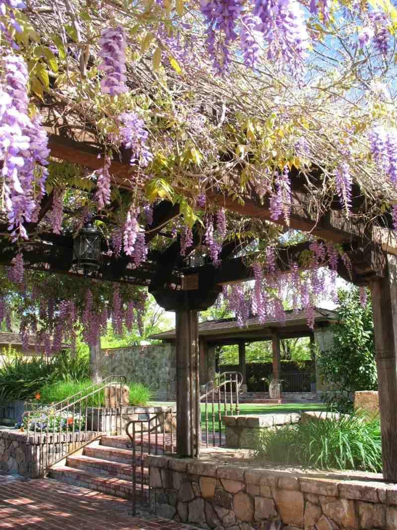 Für Pergolas Ist Der Blauregen Sehr Beliebt | Pergola | Pinterest ... Gartenlaube Pergola Begrunen