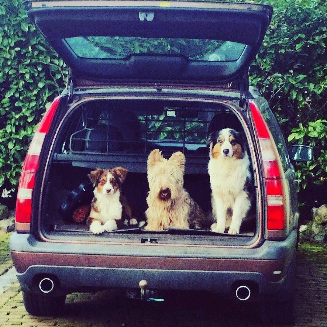 Outdoor living #lovingit #next #fit #stark #nike #outdoorliving #doglove #walk #walkwithmeplease