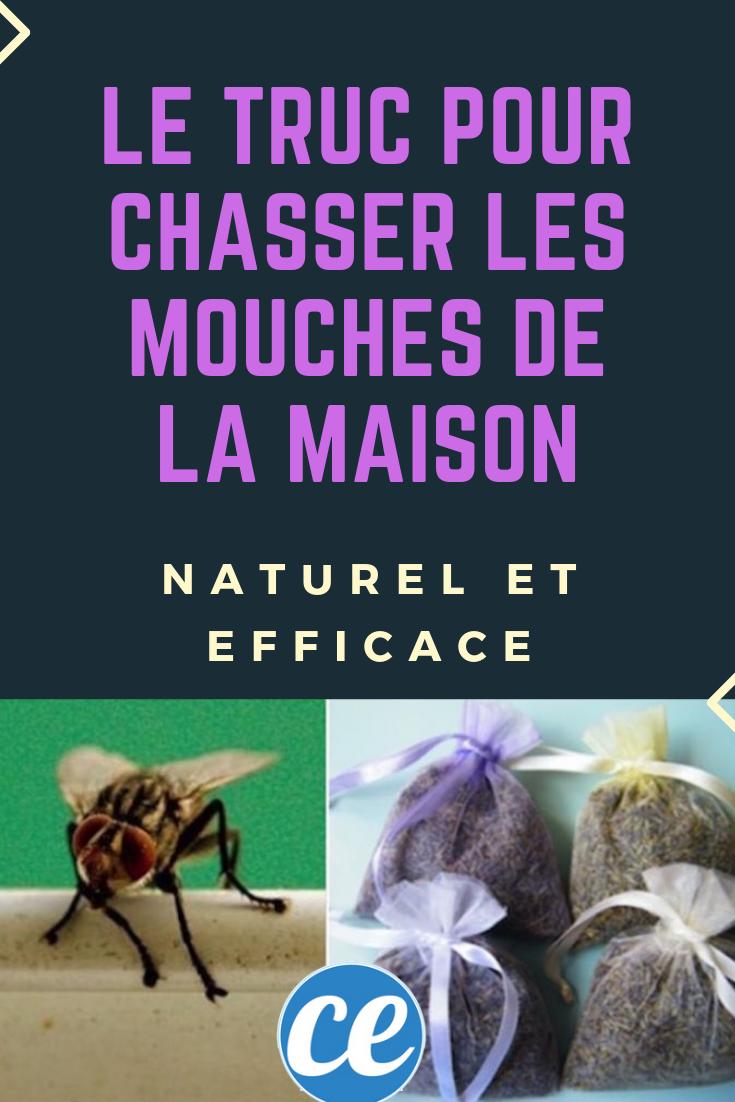 Lutter Contre Les Mouches : lutter, contre, mouches, Faire, Chasser, Mouches, Maison, Efficace, Naturel., Mouches,