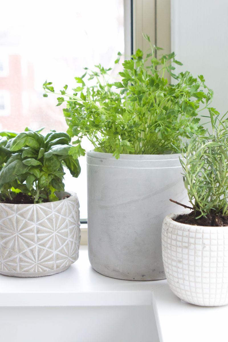 How To Create A Fresh Herb Garden Fresh Herbs Garden Herb