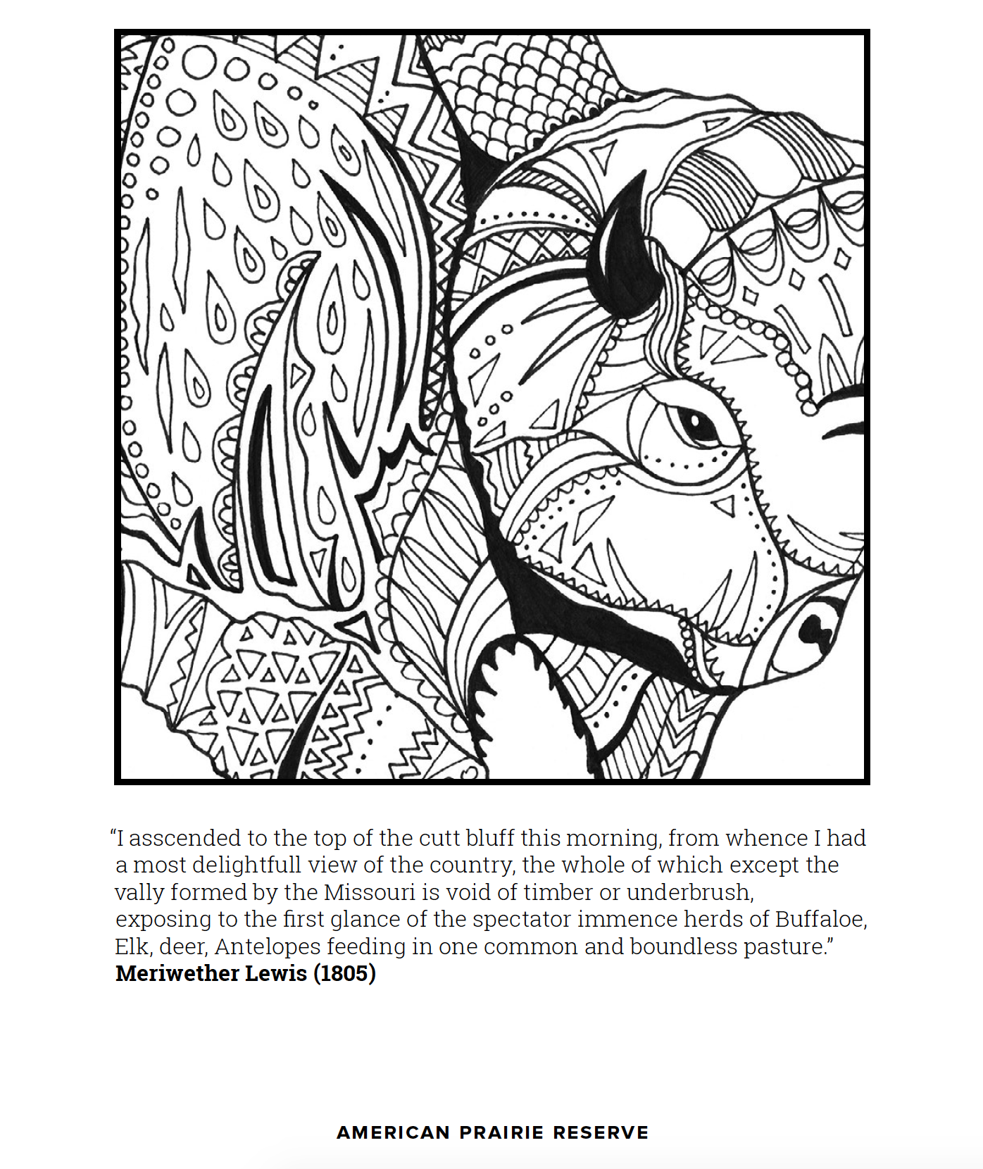 Free buffalo coloring page to download and print at home