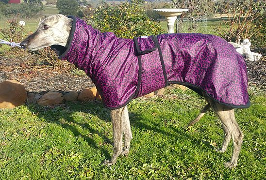 CozyGreys Greyhound Coats, Whippet Coats Melbourne