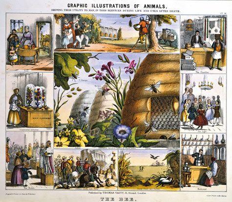 Bee 'n Skep Vintage Illustration http://www.designsponge.com/2011/04/the-beekeepers-bible.html  #bee #skep #illustration