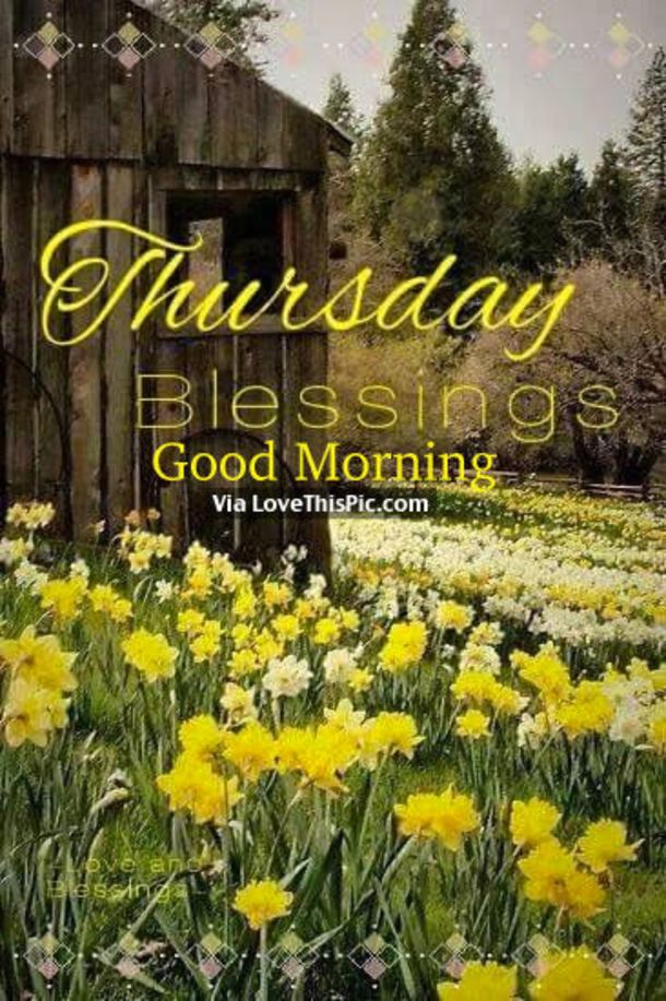 20 Best Thursday Blessings Quotes To Share Good Morning Thursday Happy Thursday Morning Good Morning Quotes
