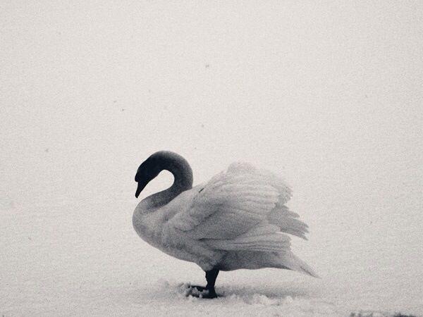 Bird//Black and White