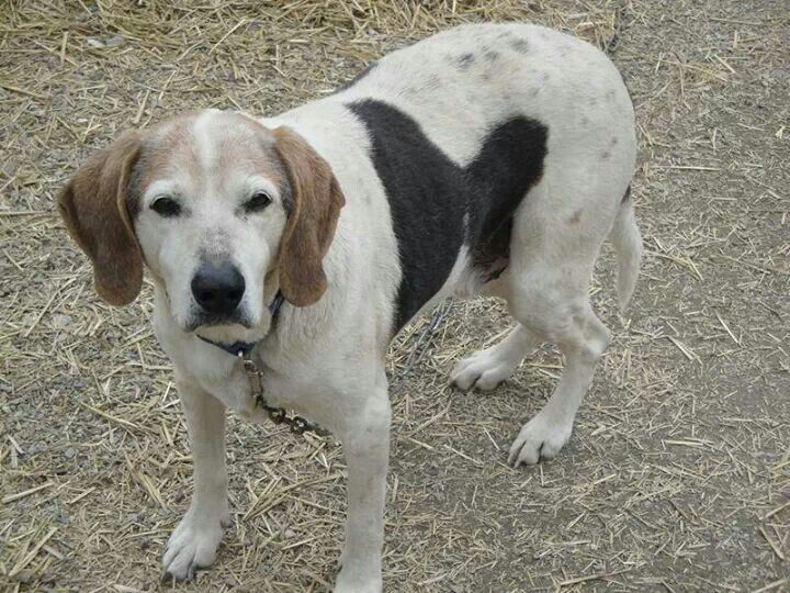 This Is Breaking My Heart 13 Years Old Very Urgent Dogs