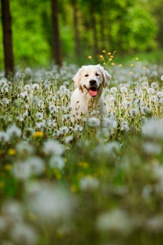 Dog In Dandelions Dogs Cute Dog Pictures Natural Dog