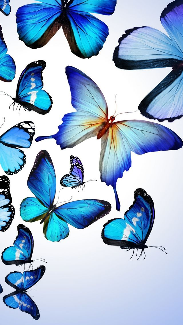 Blue Butterfly Drawing Art Beautiful Iphone 5s Wallpaper Butterfly Wallpaper Iphone Blue Butterfly Wallpaper Butterfly Wallpaper