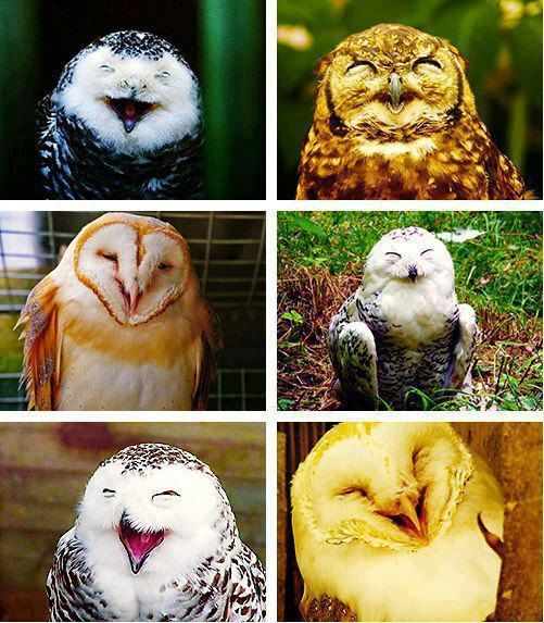 """Owls laughing """"ok who farted now"""""""