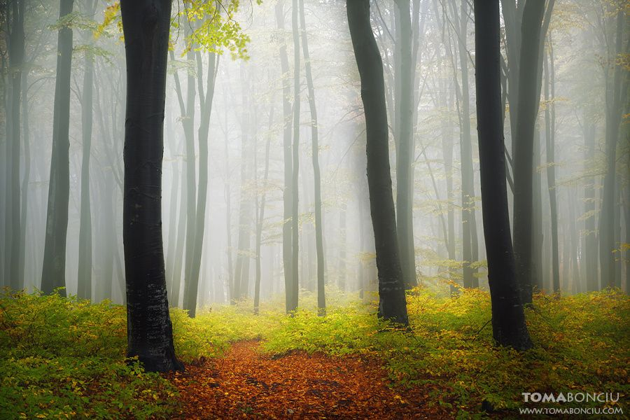 Photo The Forest by Toma Bonciu on 500px
