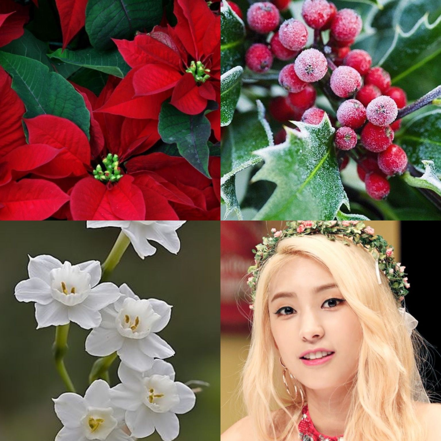 BirthFlower&KPOP // Poinsettia, Holly & Narcissus // Bora of Sistar ...