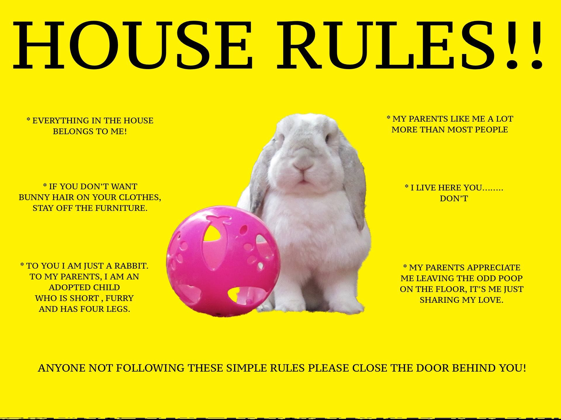 House Rules Lol 02 07 14 Crazy Bunny Lady Pet Bunny Bunny