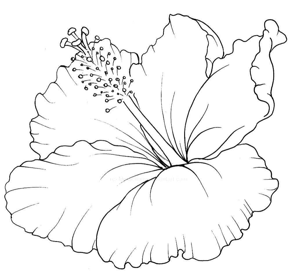 Tropical Flower Line Drawing : Hawaiian flower coloring book page pinterest